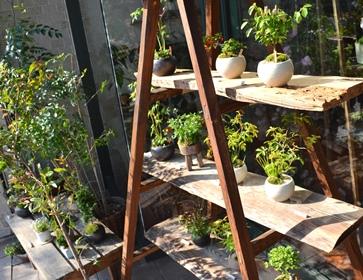 季節の盆栽仲間入り_d0263815_1675317.jpg