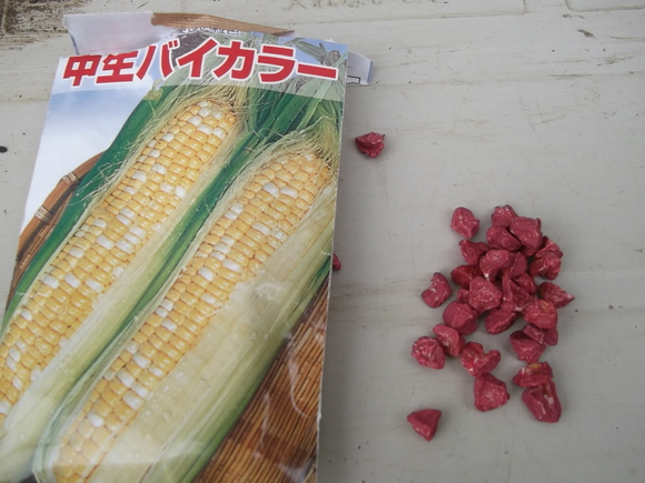 レタス類の苗は、畑デデビュー間近です。_b0137932_9495237.jpg