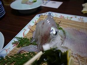 博多の夜、イカが動いた_c0030645_21421461.jpg
