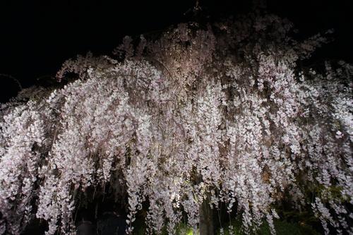 京都に行って参りました_e0142956_953990.jpg