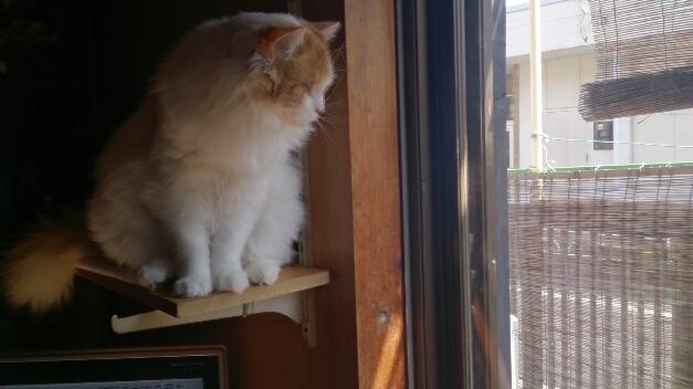 ボクは籠の鳥(猫)です。_d0116059_2130741.jpg