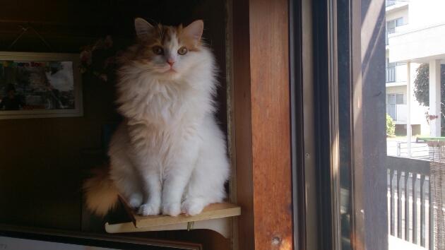 ボクは籠の鳥(猫)です。_d0116059_2134881.jpg