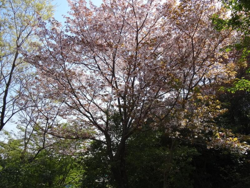 平成26年4月度運営委員会     by     (TATE-misaki)_c0108460_16214658.jpg