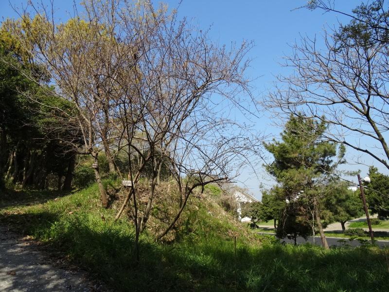 平成26年4月度運営委員会     by     (TATE-misaki)_c0108460_16214937.jpg