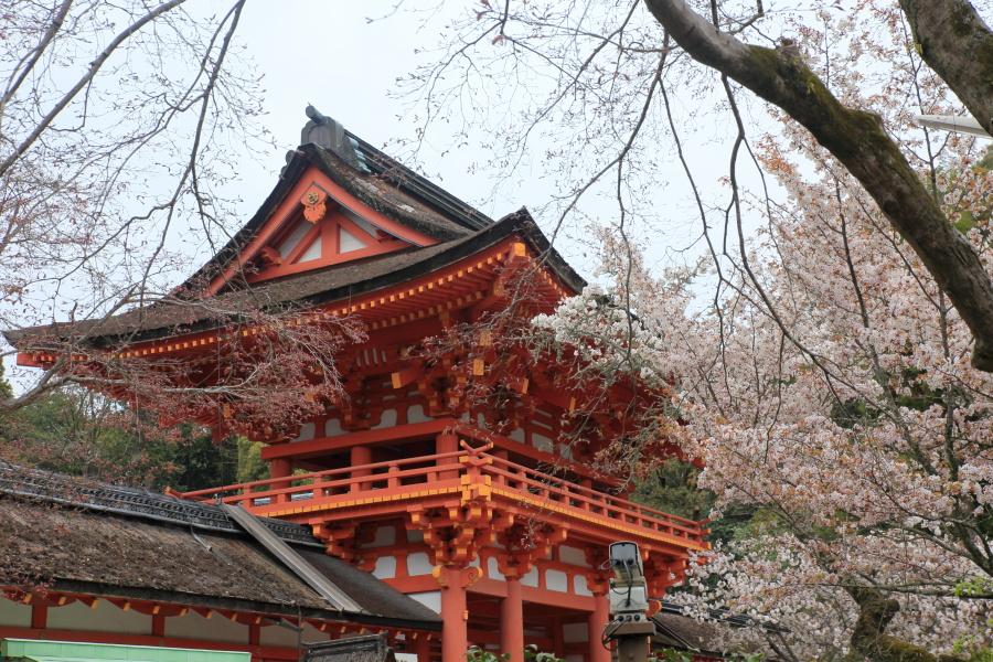桜 2014 京都<上賀茂神社>                     _f0021869_2224399.jpg