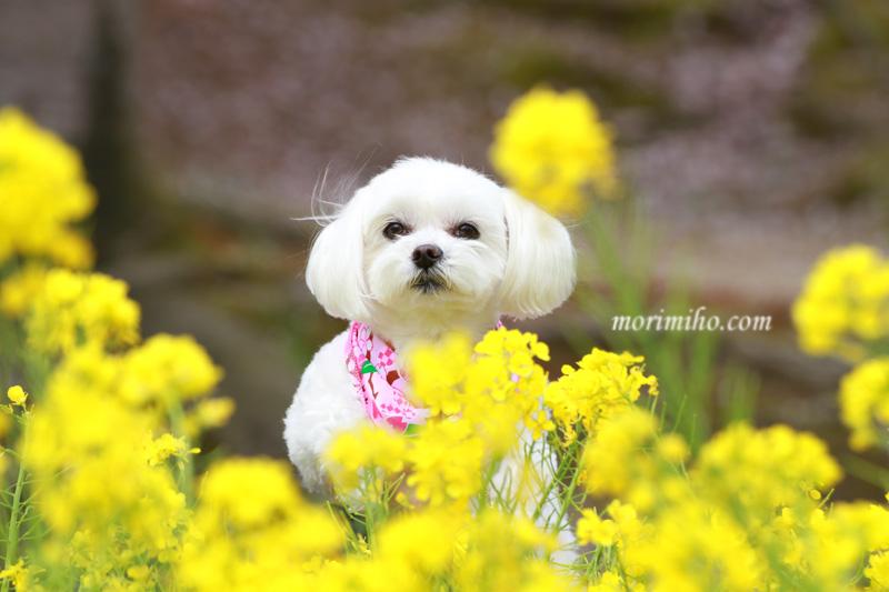 お花見撮影_b0123371_040030.jpg