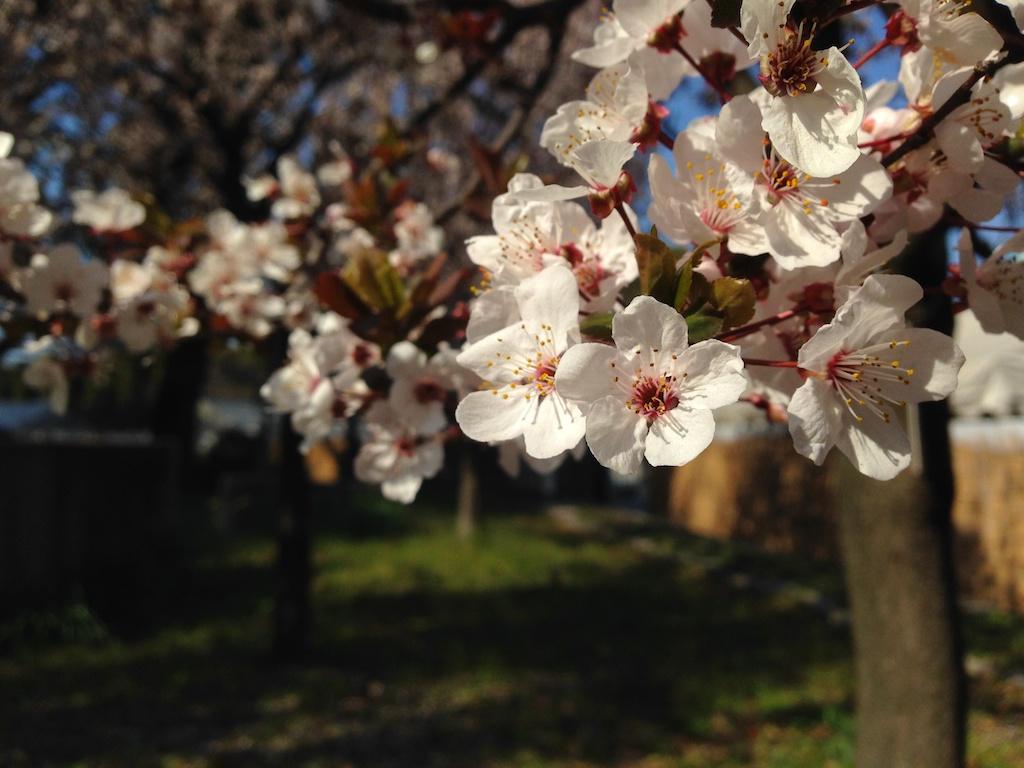 大阪城の桜_e0139376_18372929.jpg