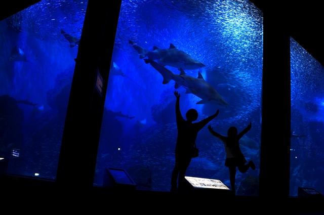 水族館に行ってきました!_a0157480_20542341.jpg