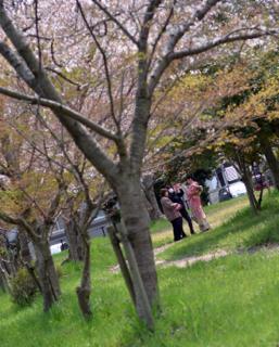 1週間前の週末がベストだった桜の花も......まだまだ...._b0194185_2247611.jpg