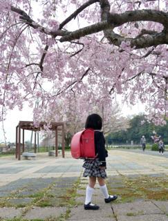 1週間前の週末がベストだった桜の花も......まだまだ...._b0194185_22502045.jpg