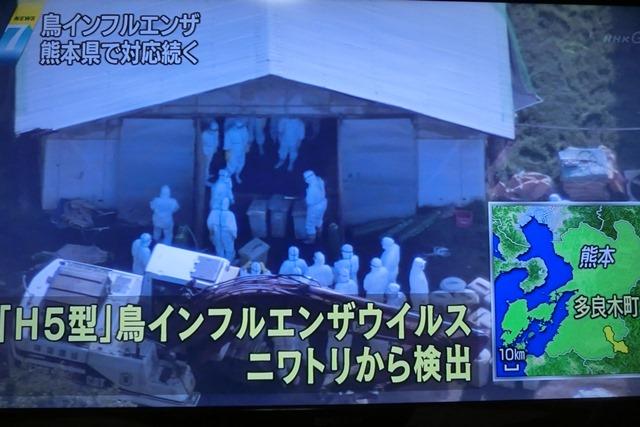 熊本県多良木町で鳥インフルエンザが発生、子豚の赤ちゃんが病原菌PDEに襲われる、STAP細胞に期待_d0181492_22512635.jpg