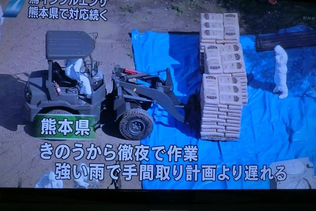 熊本県多良木町で鳥インフルエンザが発生、子豚の赤ちゃんが病原菌PDEに襲われる、STAP細胞に期待_d0181492_22514519.jpg