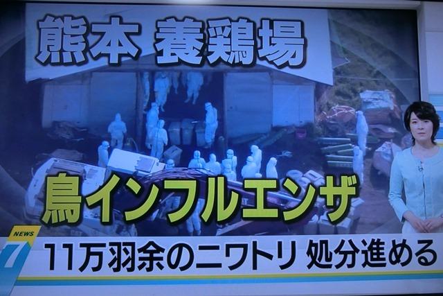 熊本県多良木町で鳥インフルエンザが発生、子豚の赤ちゃんが病原菌PDEに襲われる、STAP細胞に期待_d0181492_2251718.jpg