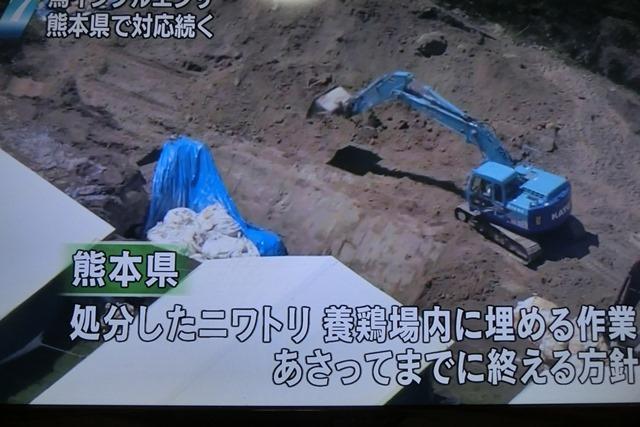 熊本県多良木町で鳥インフルエンザが発生、子豚の赤ちゃんが病原菌PDEに襲われる、STAP細胞に期待_d0181492_22521369.jpg
