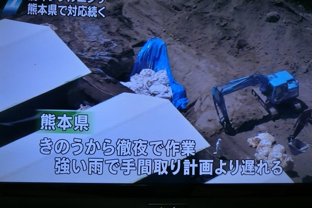 熊本県多良木町で鳥インフルエンザが発生、子豚の赤ちゃんが病原菌PDEに襲われる、STAP細胞に期待_d0181492_2252213.jpg