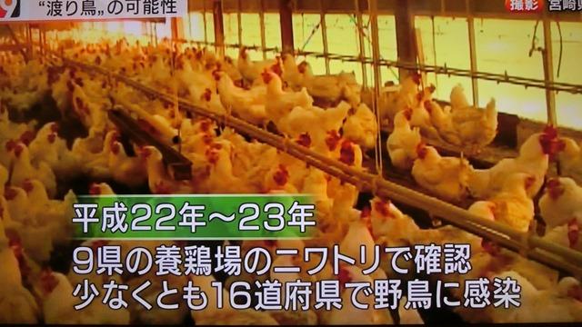 熊本県多良木町で鳥インフルエンザが発生、子豚の赤ちゃんが病原菌PDEに襲われる、STAP細胞に期待_d0181492_22522773.jpg