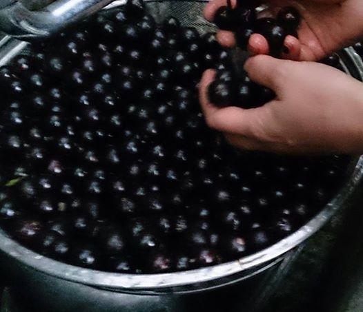 ジャボチカバ大量収穫!_b0028299_2244592.jpg