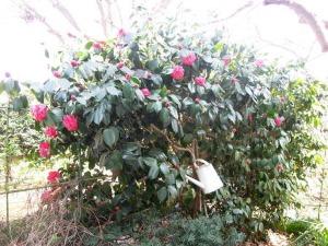 アトリエは春爛漫_d0322102_111431.jpg
