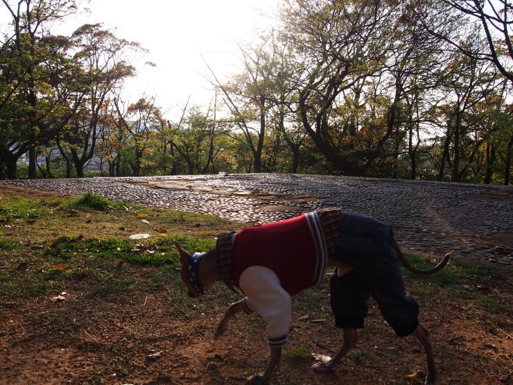 ついでに夜宮公園散歩_f0249710_22225091.jpg