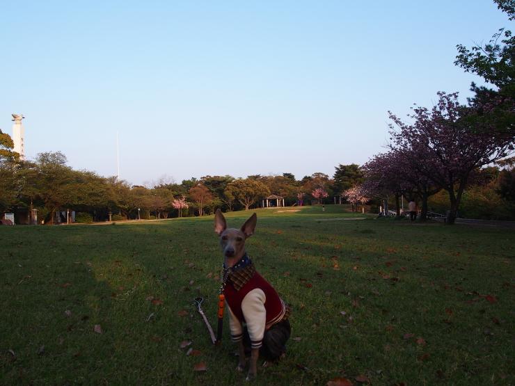 ついでに夜宮公園散歩_f0249710_22334157.jpg