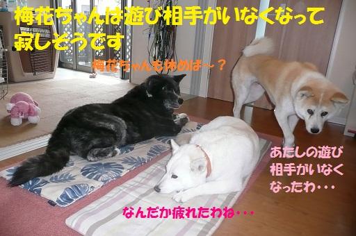 f0121712_1619814.jpg