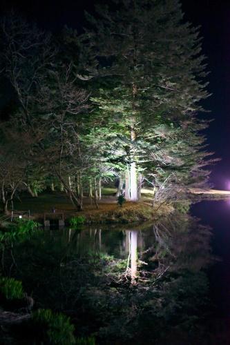 Night    ・・・春宵・・・_f0333031_10322156.jpg