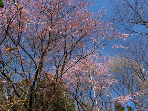 桜咲く_d0127634_132896.jpg
