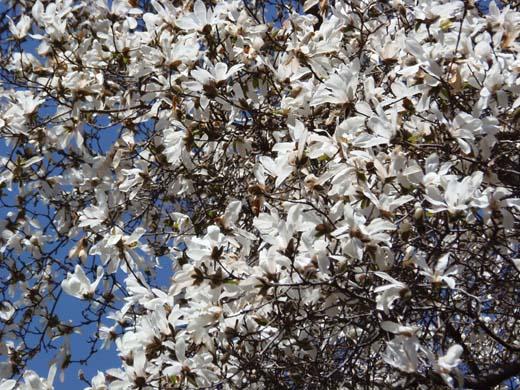 桜咲く_d0127634_13295319.jpg