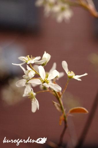 白い花ばかり_e0119151_11532236.jpg