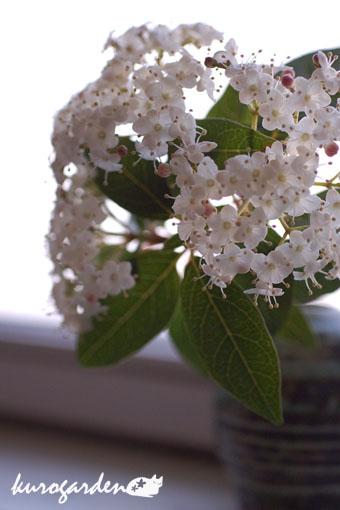 白い花ばかり_e0119151_11533086.jpg