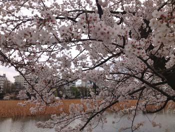おそばと桜_e0157359_16503082.jpg