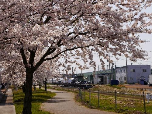 孵化場にも春が来ました!_e0266363_15211194.jpg