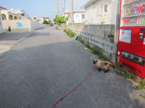 Tanuko is still popular!_c0153966_9442053.jpg