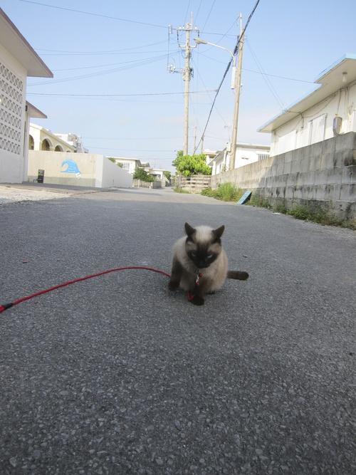 Tanuko is still popular!_c0153966_9454669.jpg