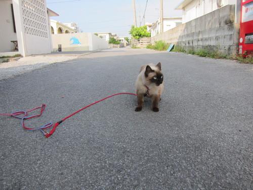 Tanuko is still popular!_c0153966_9462412.jpg