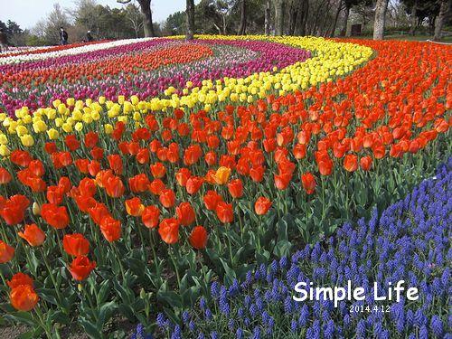 チューリップ祭、、、木曽三川公園 : Simple Life