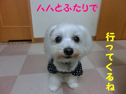 b0193480_1601175.jpg