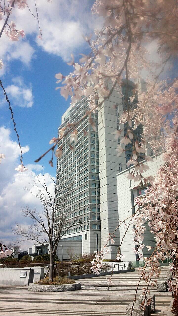 春ですね、もうすぐGWです_b0244888_9223730.jpg
