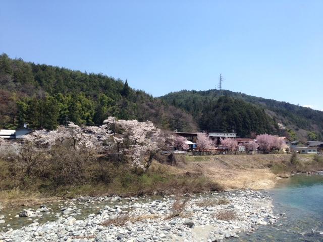 sakura_b0283089_22414629.jpg