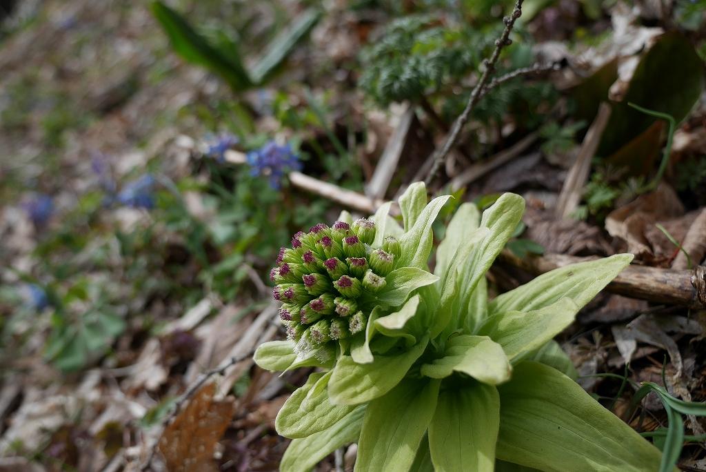 春の野草_f0138096_7161385.jpg