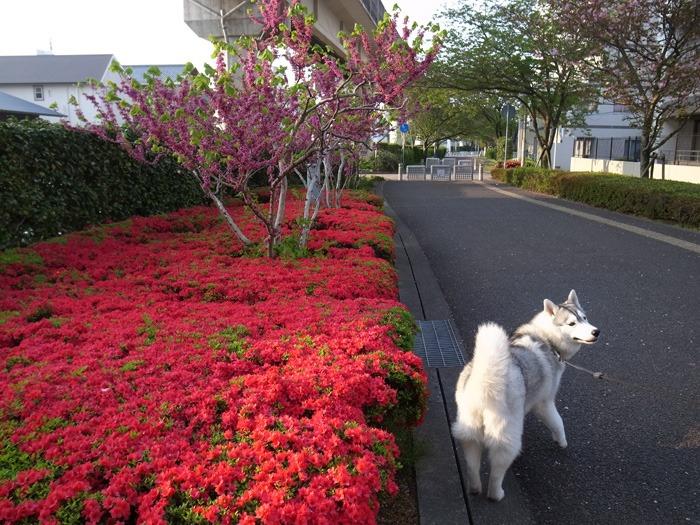 ごきげんな朝(^o^)_c0049299_21463519.jpg