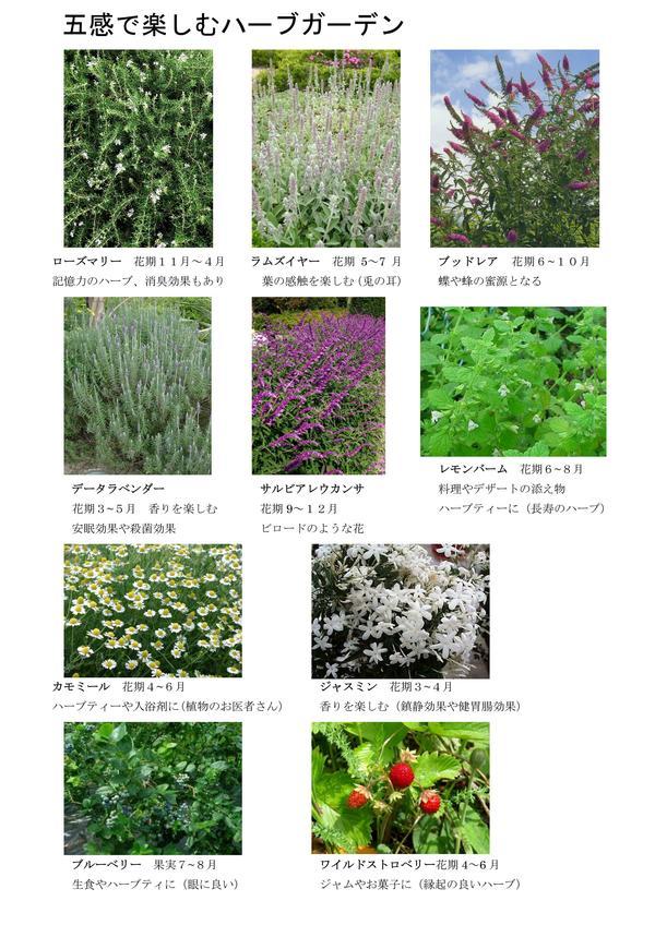 進む植栽計画_f0299108_13433086.jpg