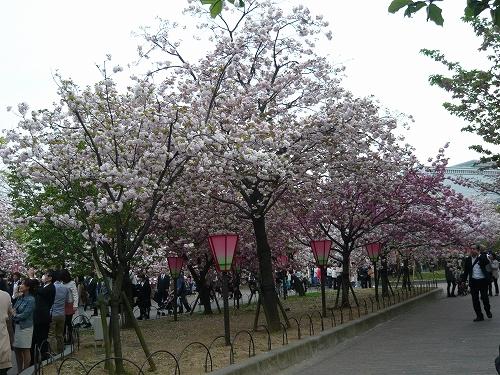 造幣局✿桜の通り抜け_f0223914_21344522.jpg