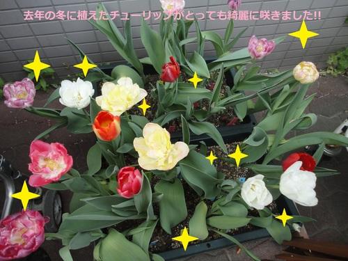 Blog更新終了のお知らせ_e0175022_15162999.jpg