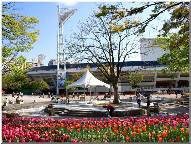 横浜公園チューリップ2014_d0123528_17134650.jpg