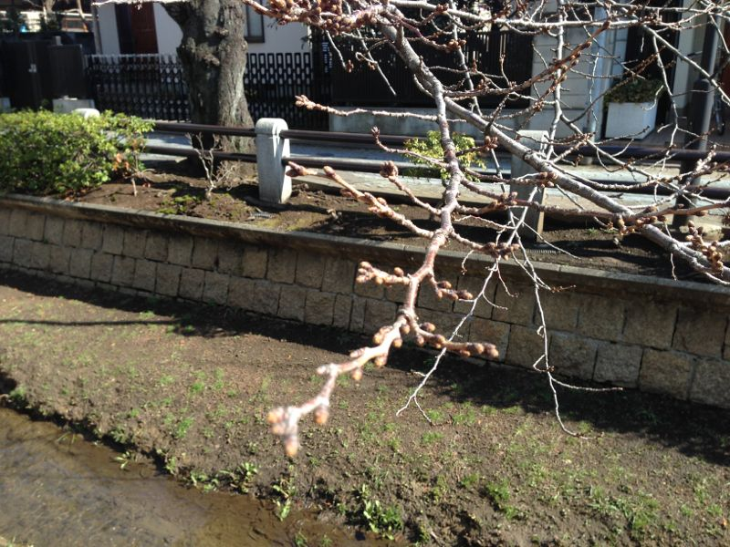 今年の桜_f0209434_2245174.jpg