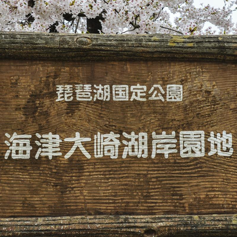 海津大崎 湖岸の桜  2014 0413_d0246136_18104135.jpg