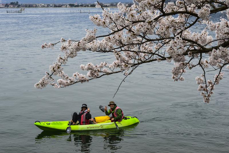 海津大崎 湖岸の桜  2014 0413_d0246136_18111616.jpg