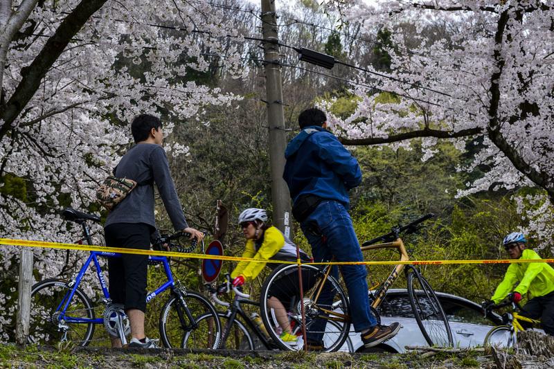 海津大崎 湖岸の桜  2014 0413_d0246136_18114544.jpg