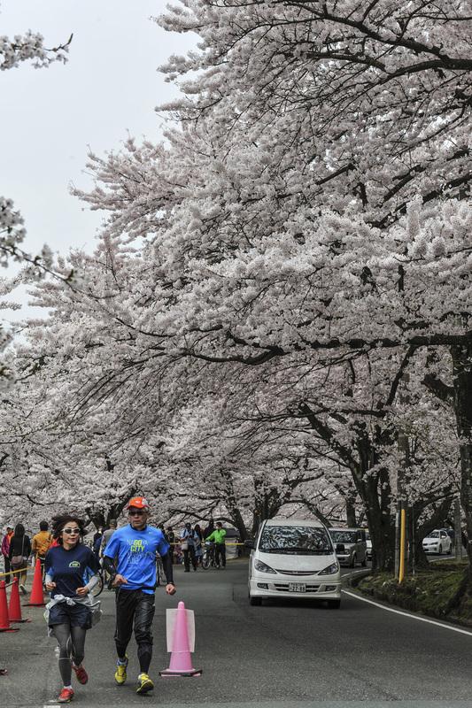 海津大崎 湖岸の桜  2014 0413_d0246136_18121074.jpg